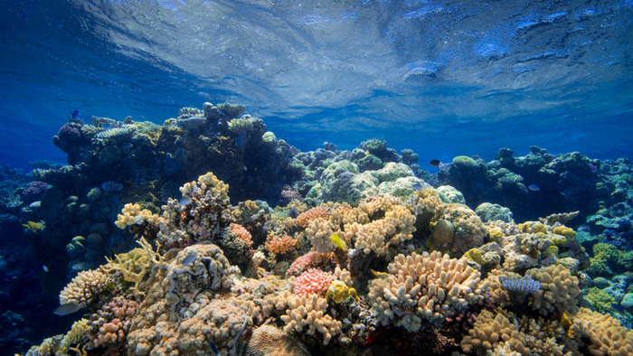 Watching a Coral Reef Die as Climate Change Devastates One of the Most Pristine Tropical Island Areas on Earth Giving Compass