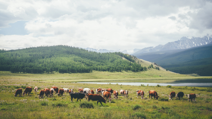 Grasslands Become Emissions Source Due to Livestock Increase