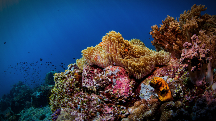 Coral Reef Scientists Are Concerned Over Ocean Ecosystems Giving Compass
