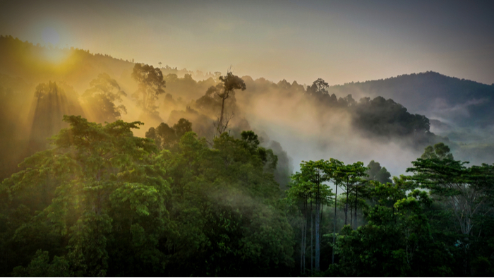 Understanding and Measuring the Impact of Climate Change on the Rainforest Giving Compass