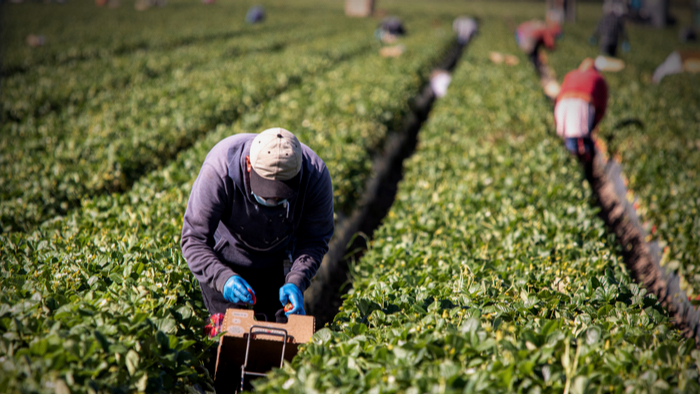 Migrant Worker System in the U.S. Giving Compass