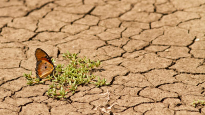 How Donors Can Maximize Impact for Fighting Climate Change